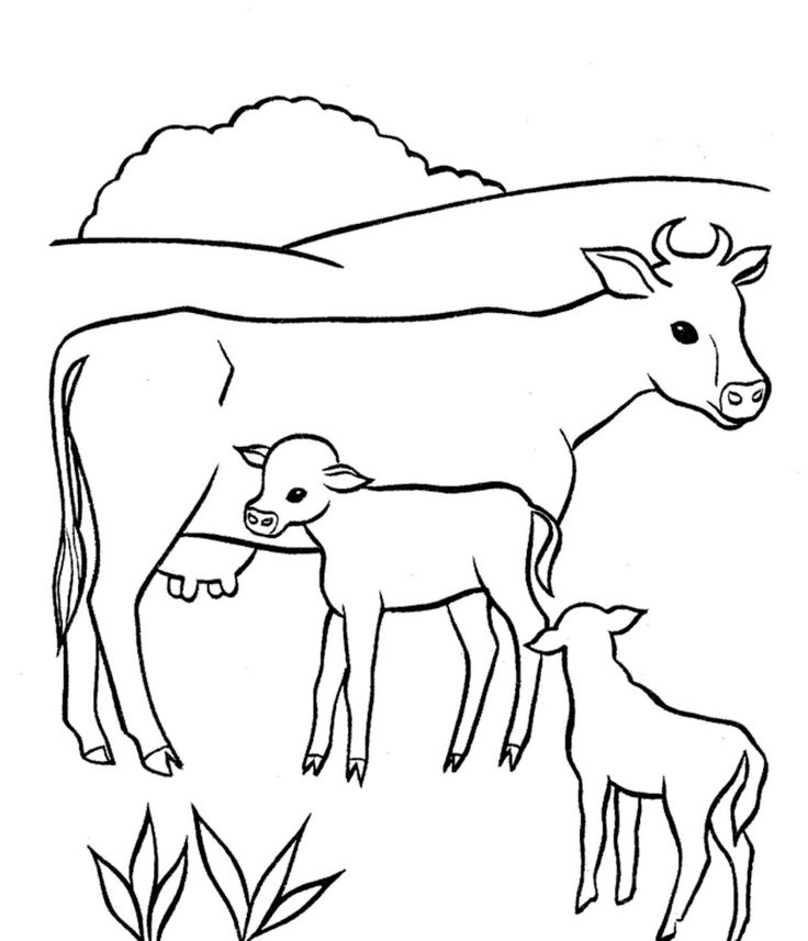 Baby Cow Coloring Pages With Mom