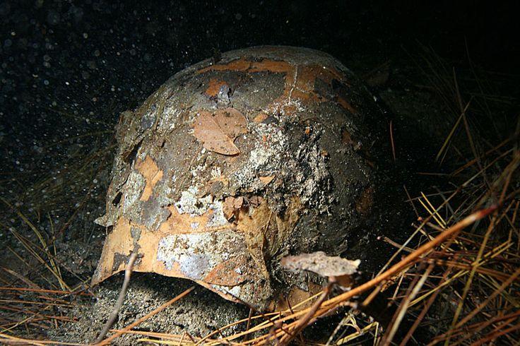 Retrouvé dans un trou d'eau, un fossile de tortue livred'intéressantes indications sur l'histoire évolutive de Chelonoidis, un genre de tortue sud-américain.