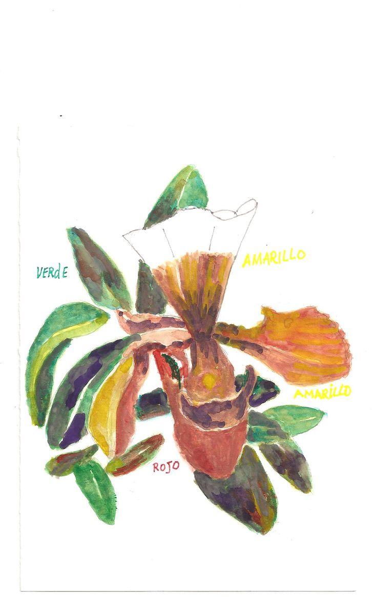 Orquidea.
