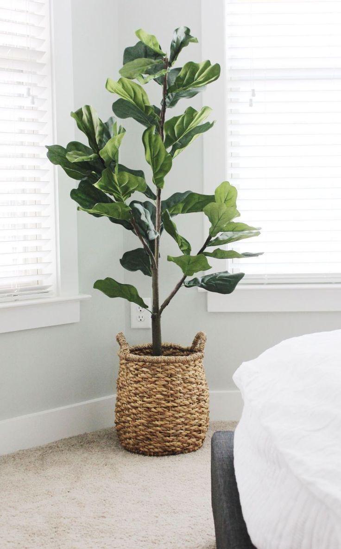84 Best Indoor Plants Natural Pots Accents Images In 2020 Indoor Plants Plants Plant Decor In 2020 Plant Decor Indoor Living Room Plants Plant Decor