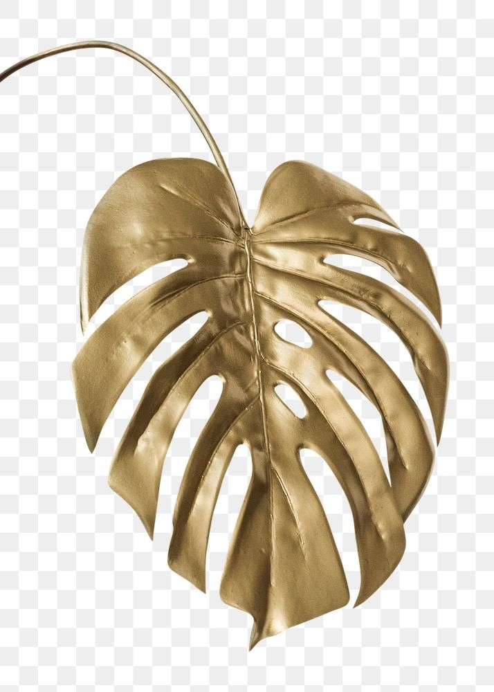 Shiny Golden Monstera Leaf Transparent Png Free Image By Rawpixel Com Teddy Rawpixel Monstera Leaf Gold Wallpaper Background Paper Background Texture