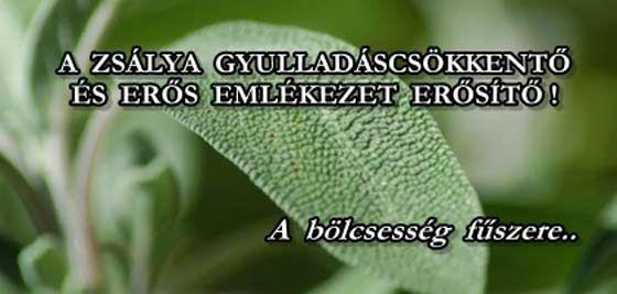 A ZSÁLYA GYULLADÁSCSÖKKENTŐ ÉS ERŐS EMLÉKEZET ERŐSÍTŐ