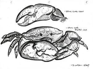 108 best crustacean images on pinterest