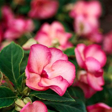 Shade Loving Plants That Bloom All Summer-The Garden Glove