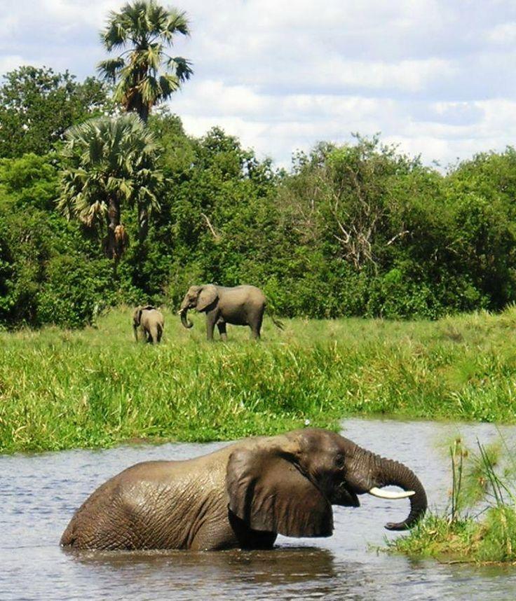 Murchison Falls National Park, Uganda, Africa - DAG 10 & 11