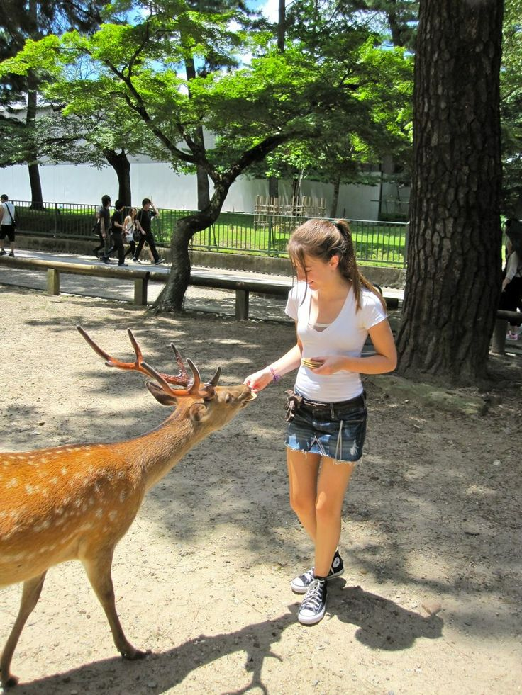 Take a look at this hungry deer near Kyoto, Japan! If you're looking to keep your wildlife well-fed, contact Sweeney Feeders for quality, durable automatic deer feeders! http://sweeneyfeeders.com/Wildlife-Deer-Feeders-c0010.html