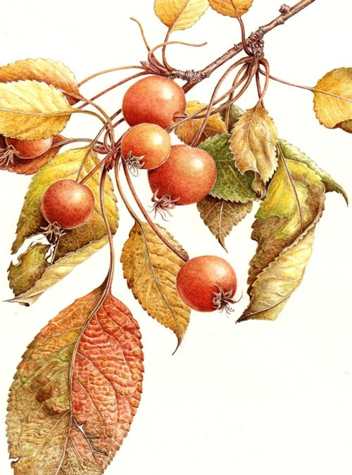 Beautiful botanical artwork by Margaret Best