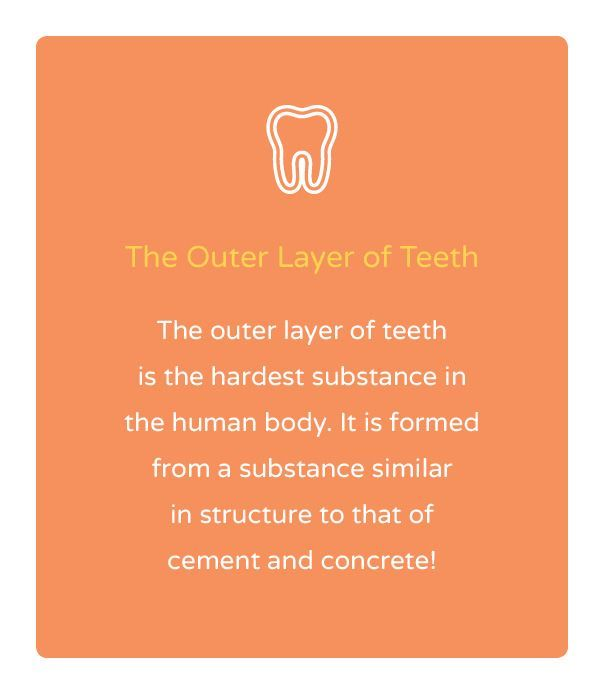 """Orthodontic Facts #1: """"The outer layer of teeth is hardest substance in the human body."""" Central Texas Orthodontics - 300 Morgan Street, Harker Heights, TX 76548 Phone: 254 526 8666  #orthodonticfacts"""