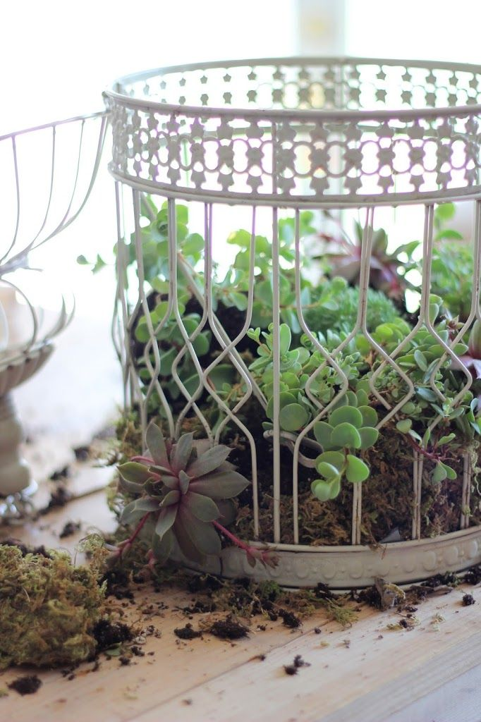 Best 25 birdcage planter ideas on pinterest cava for Succulents that do well in shade