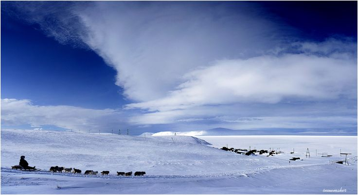 Домой... #фото #чукотка #собачья упряжка #снег #photo #chukotka #snowmaker #облака #синева Автор: snowmaker