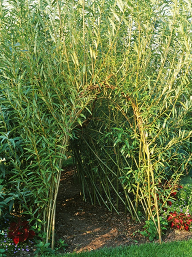 living willow tunnel ... man, if i were a kid this would be super fantastic.