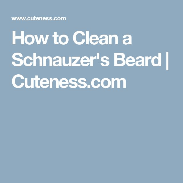 how to clean my schnauzers beard