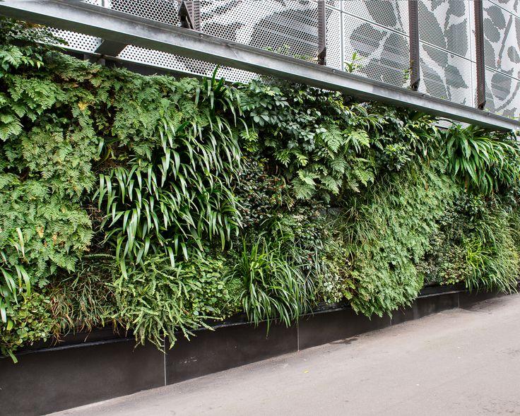 External green wall, Docklands
