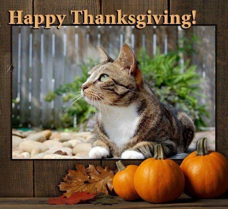 Joey the garden cat. Happy turkey day, Thanksgiving