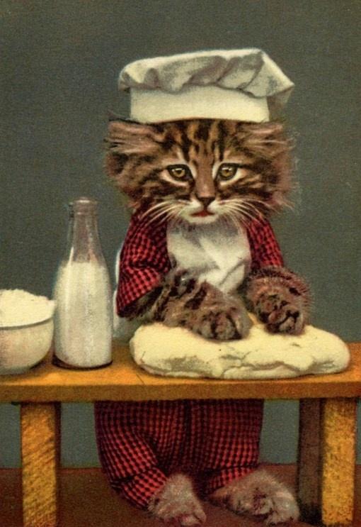 Harry Frees kitty baking cakes!