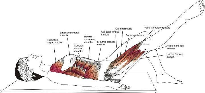 Tenho notado no facebook a divulgação de muitas imagens do livro que nós já havíamos indicado em nosso blog chamado de Pilates Anatomy ....