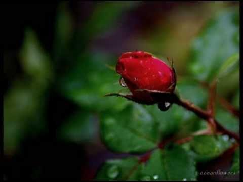 ERNESTO CORTAZAR- Under the rain together