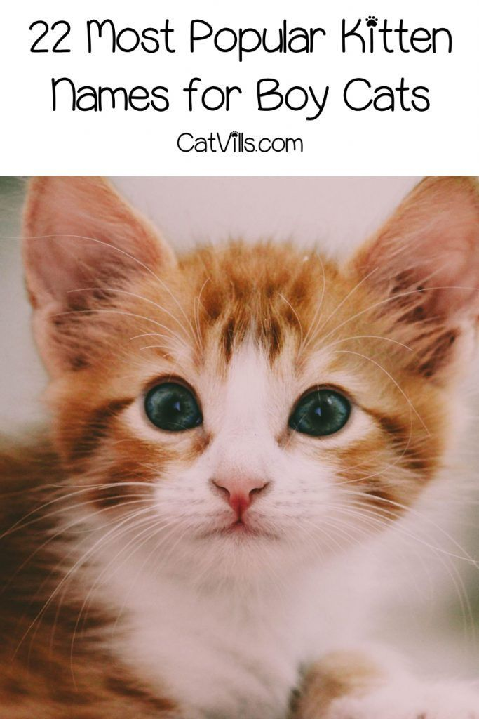 These Are The Top 42 Most Popular Kitten Names Catvills Cool Cat Trees Kitten Names Kitten Names Boy