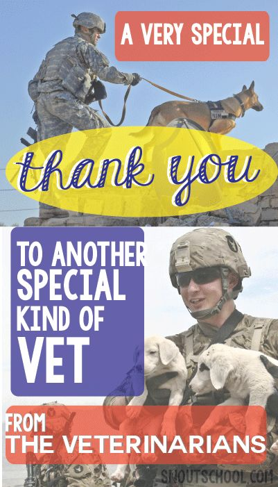 """Happy Veterans Day to one type of """"Vet"""" from another, the veterinarians!"""