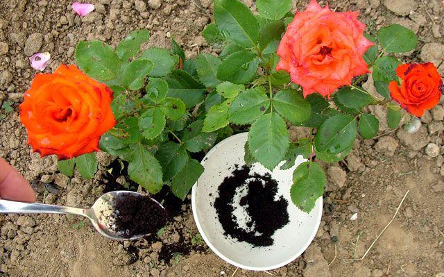 Ne dobd ki a kávézaccot! Ezek a növényeid imádni fogják - www.kiskegyed.hu