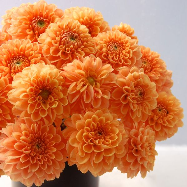 201 best images about orange weddings on pinterest for What flowers are in season