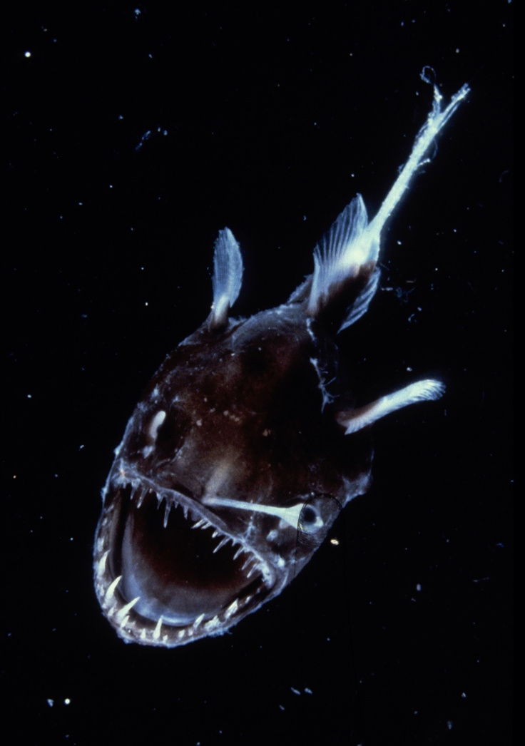 Paranormal pop culture new deep sea creatures found for Deep sea fish