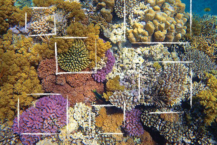 Darono | Reef #darono #reef