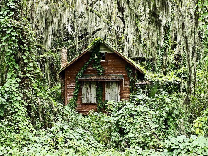 11. This house near Crescent City is certainly where Goldilocks encountered three Florida black bears.