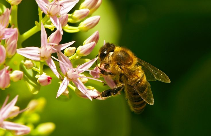 Pollen angels: The E.U.'s ban on bee-killing pesticides begins. Will it help?