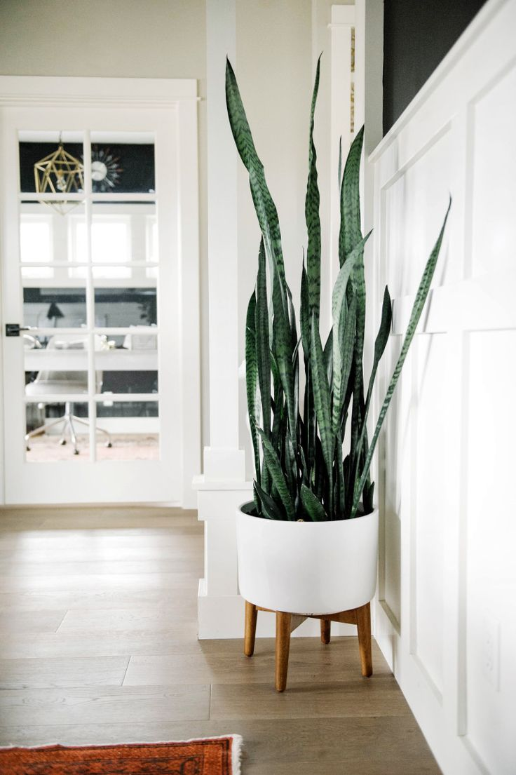 Living Room Plant Best 25 Bedroom Plants Ideas On Pinterest  Plants In Bedroom