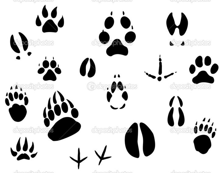 free bear sillouette  Pages | Animal footprints — Stock Vector © Seamartini #3386584