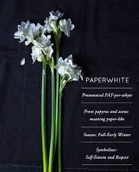 Image result for paperwhites flower meaning 4 my Sweetie 🦋