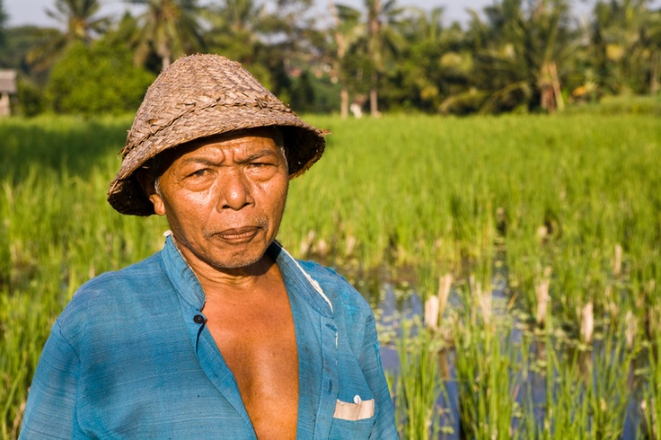 A farmer in front of his rice field near the Campuhan Ridge in Ubud, Bali early in the morning.