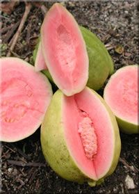 Five-Minute Guava Ice Cream    Suzanne Dunaway Los Angeles Chapter of Les Dames d'Escoffier    This is the easiest,tastiest dessert one can serve-fresh,fairly light,and it takes only 5 minutes to make! One can use the sapote also with this recipe.