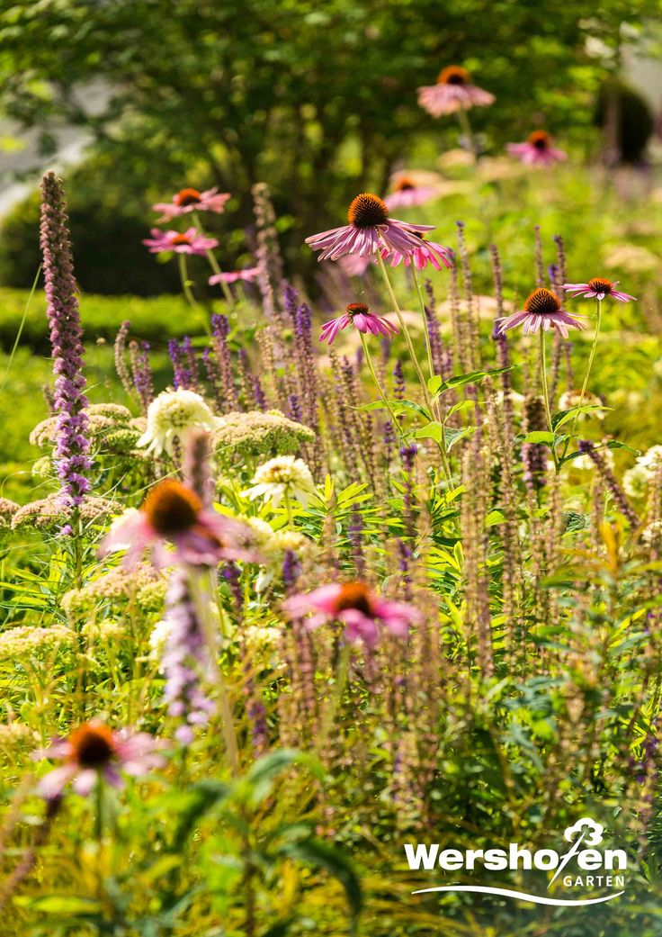 59 besten Wershofen Garten Bilder auf Pinterest