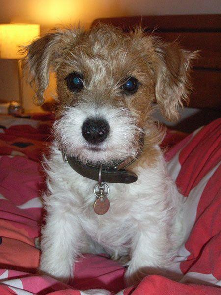 Sporting Lucas Terrier - England