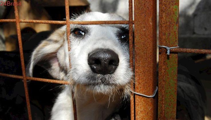 Comissão debate projetos de lei que visam coibir maus-tratos aos animais