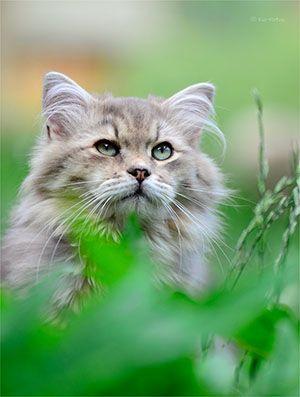 Hinweise zur Behandlung diverser Katzenkrankheiten