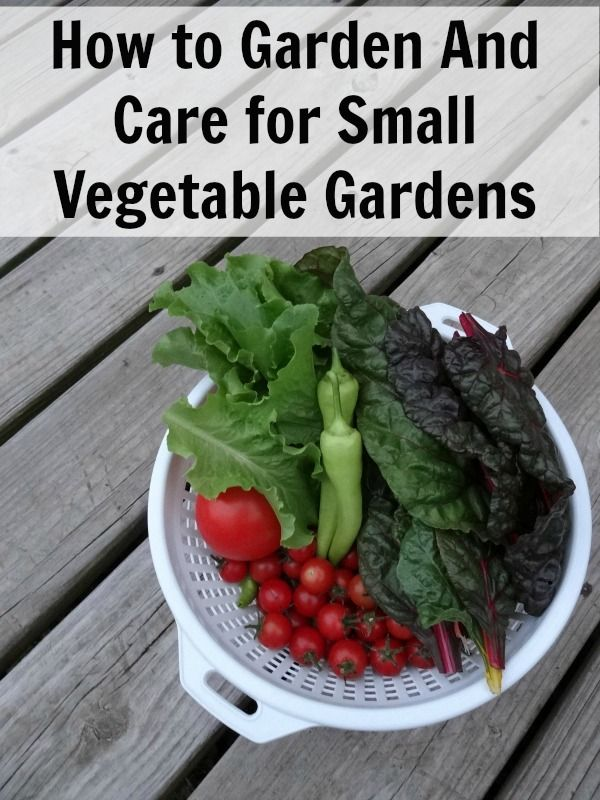 Learn how to garden in small vegetable gardens. Includes how to care for small vegetable gardens, what containers to use and more!  My favorite kind of gardening!