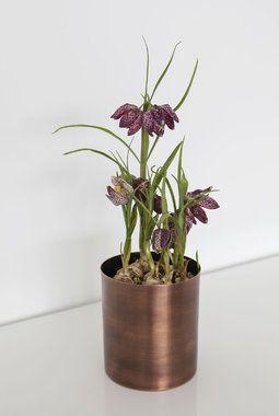 Fritillaria eller rutelilje er en utrolig populær løkblomst.