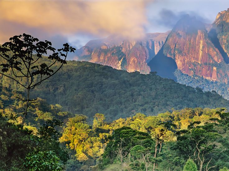 Atlantic Rainforest, Organ Mountains, Serra dos Orgaos ...