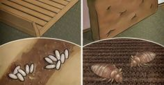Il tuo letto è la casa di milioni di acari. Ecco come rimuoverli subito e in modo naturale