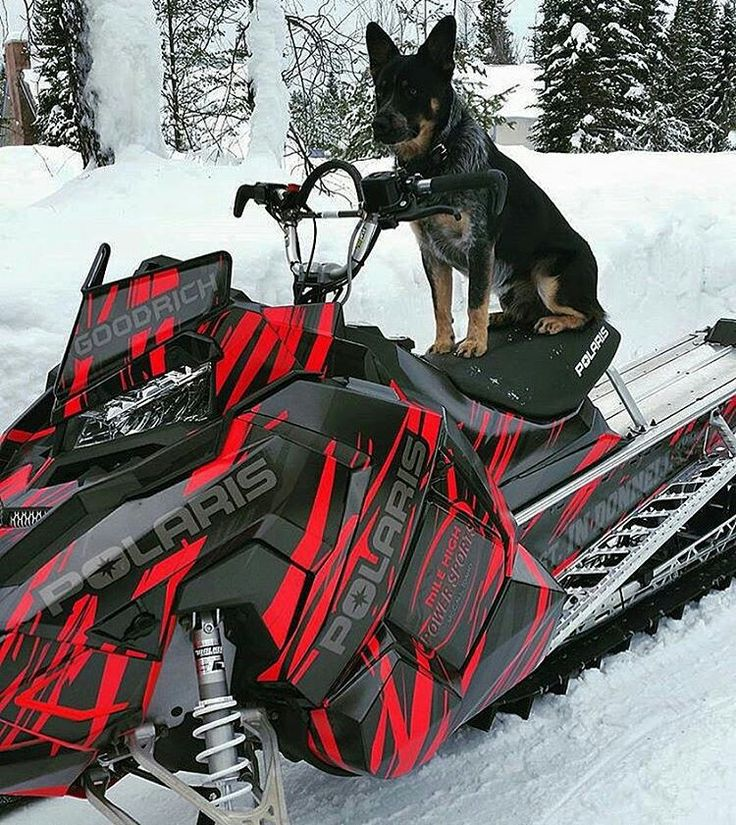 Love the color of the snowmobile