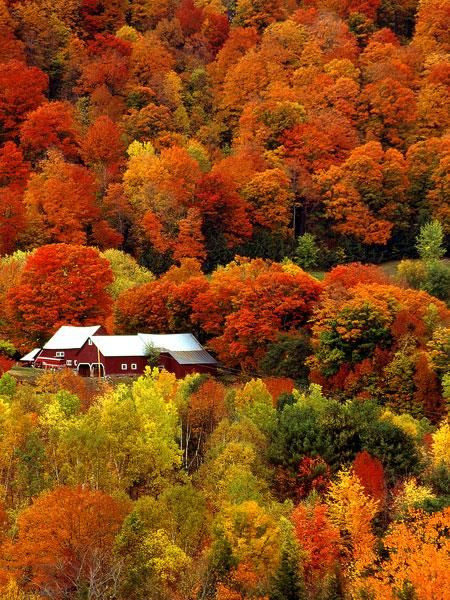 Autumn Pictures - Fall Pictures - Fall Landscape - A fall day on a Vermont Countryside. Magnificent colors.