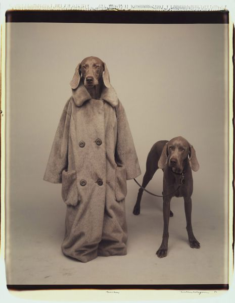"I may have a slight obsession with William Wegman.  Especially his film ""The Hardly Boys""."