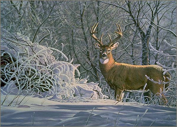 """Whitetail Winter"" - acrylic painting of a whitetail deer in snow by Bruce Miller"