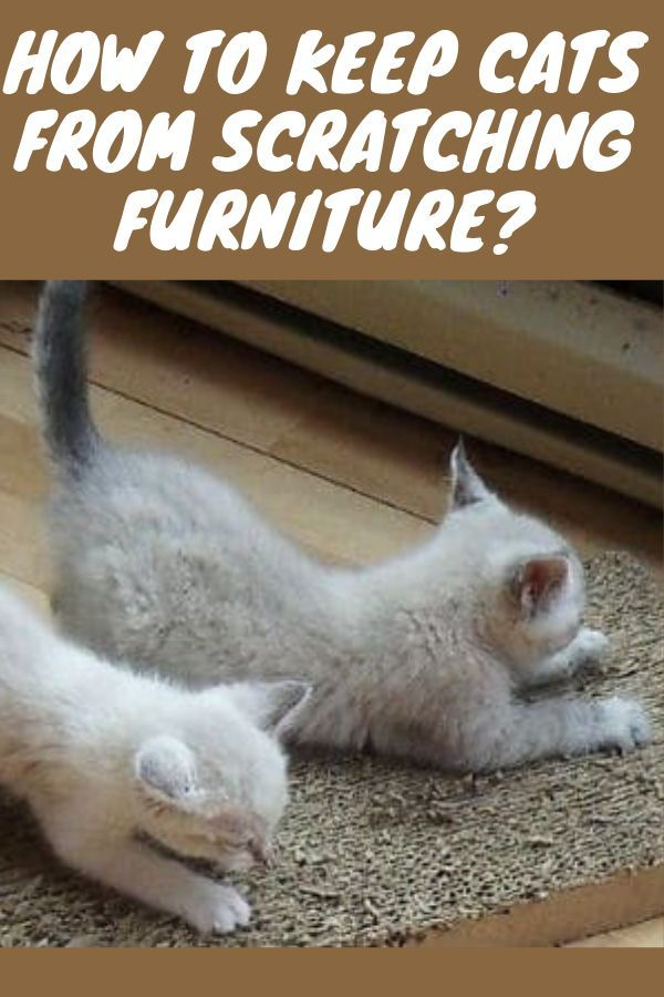 How To Keep Cats From Scratching Furniture Kitten Tips Caring For A Kitten Kitten Care Kittens Cutest First Time K Kittens Cutest Kittens Funny Kitten Care