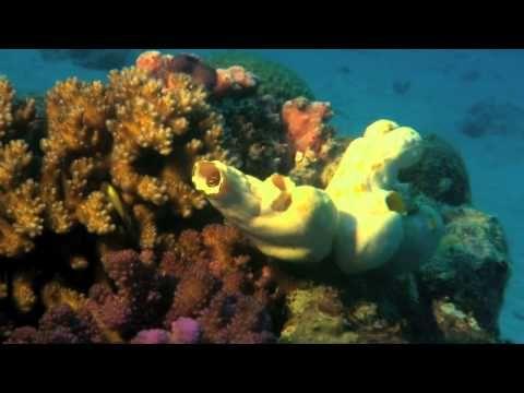 Perla oceanow-dokumentalny lektor pl HD