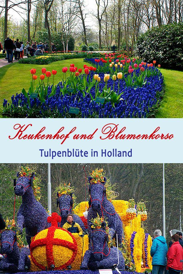Keukenhof Und Blumenkorso Tulpen Tulpen Feld Holland