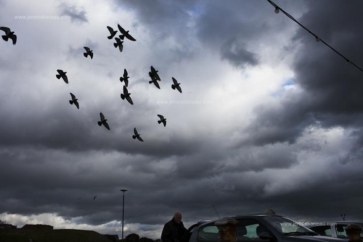 Pigeons flying away by Southsea's promenadeTops Floors, Years Ago, Vivid Blue, Southsea Promenade, Pigeon Fly, Thin Blue, Pigeons Flying City